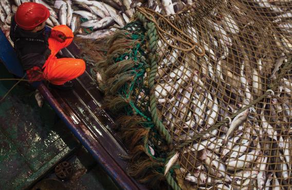 Положения об экипаже рыбопромыслового судна и рыболовстве